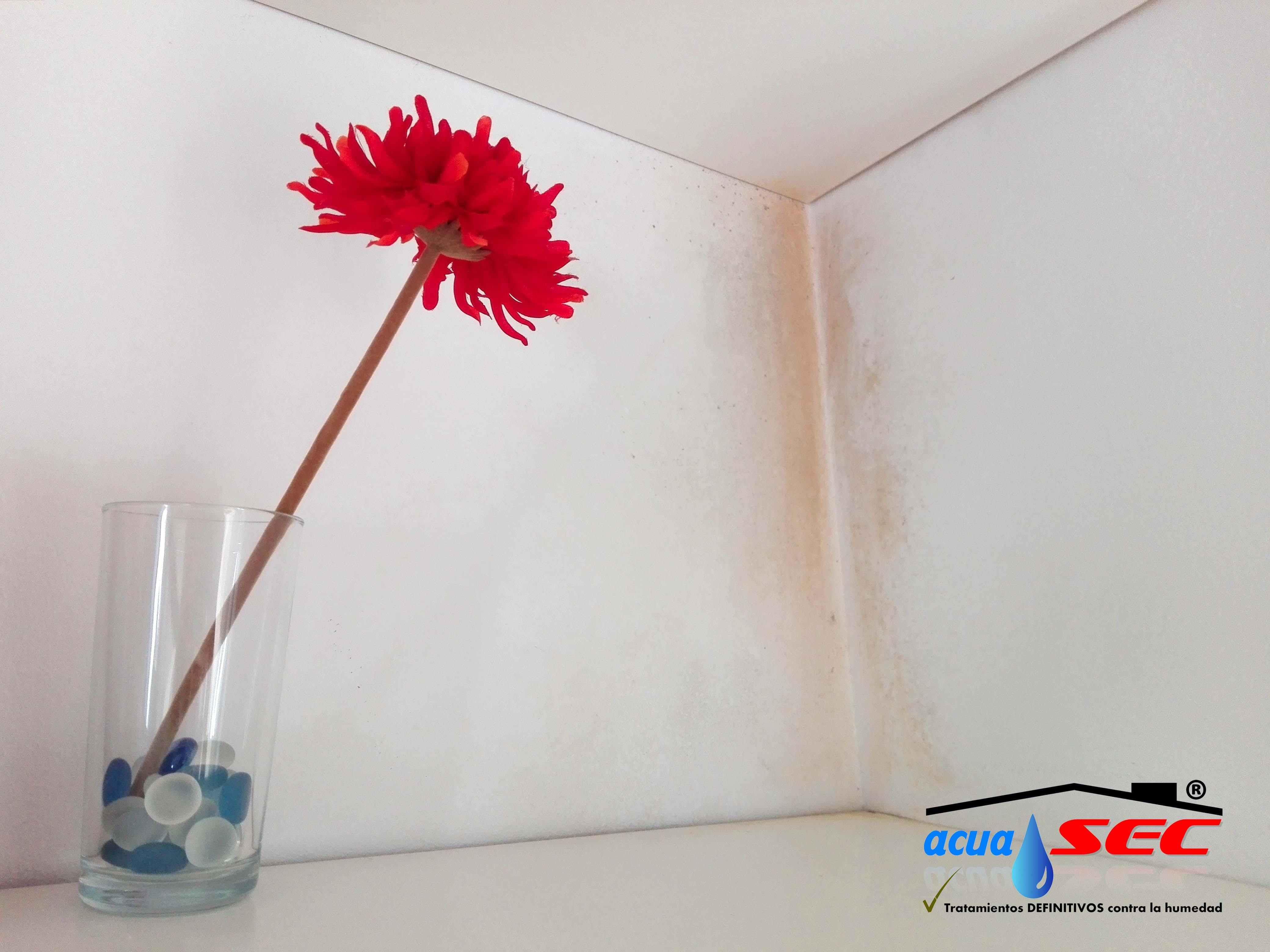Quitar humedad habitacion amazing purificador de aire - Quitar humedad pared ...